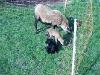Lämmchen mit Muttertier