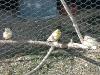 Muttervogel mit zwei Küken
