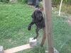 Miniföns im Zaun