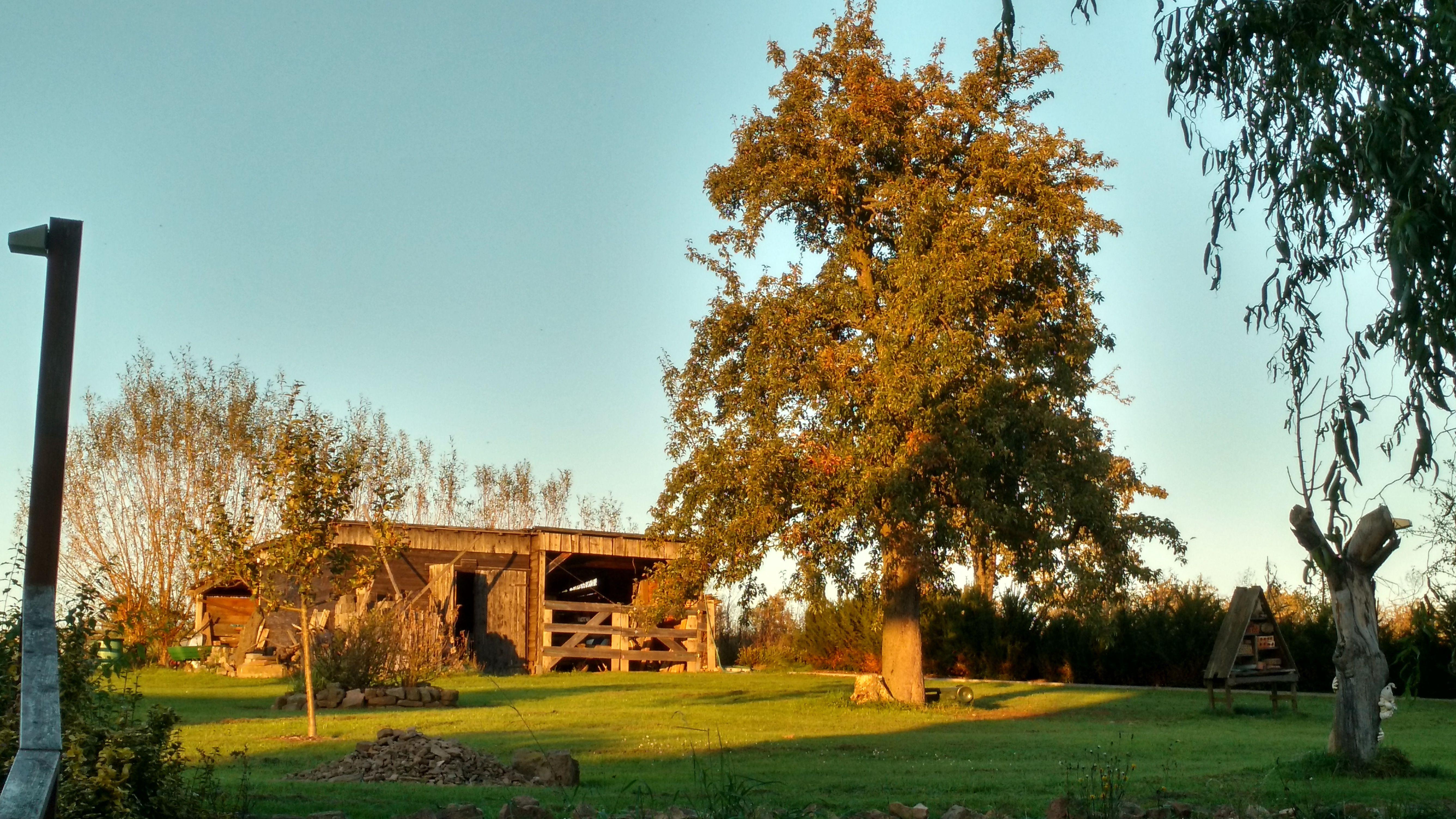 Unser Birnbaum
