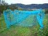 Netze gegen die Stare