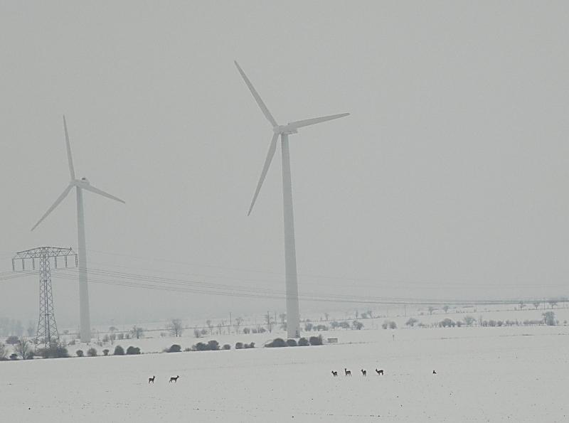 rehe-bei-riethnordhausen-03