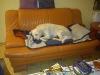 Paula genießt es, auf dem Sofa zu schlafen